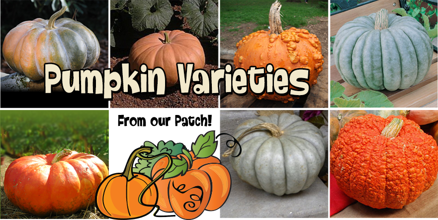 pumpkinVarieties